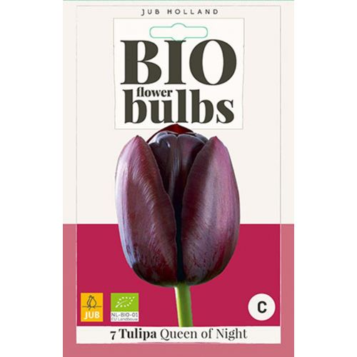 Bio tulp Queen of Night 7 bollen - afbeelding 1