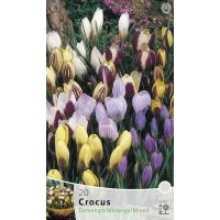 Crocus species mix 20 stuks