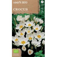 Crocussen species wit go 4 pure 100% BIO 15 stuks