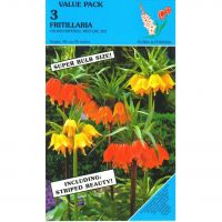 Keizerskroon Fritillaria Crown Imperial Mix 3x1