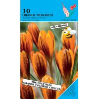 Crocus Orange Monarch 10 stuks