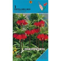 Keizerskroon Fritillaria Crown Imperial Red