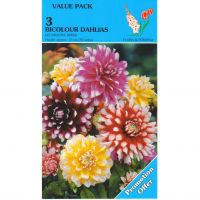 Dahlia bicolour decorative 3 stuks