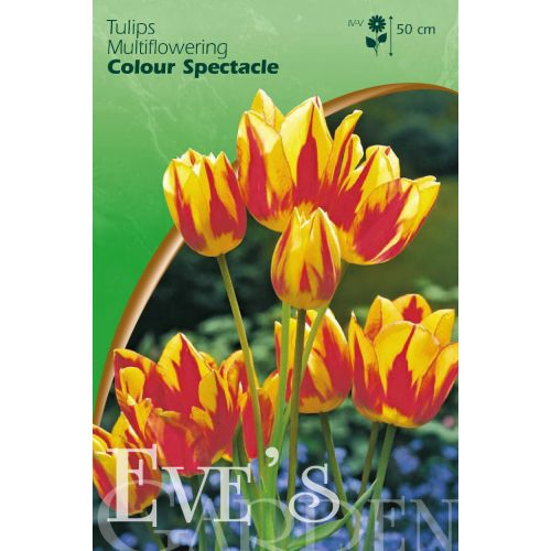 Tulp Colour Spectacle 8 bollen